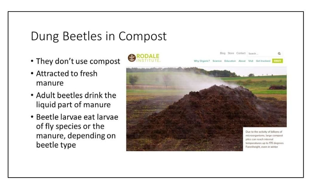 Dung beetles in compost