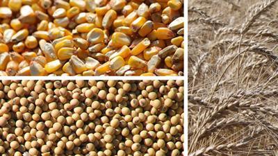 Grain market graphic