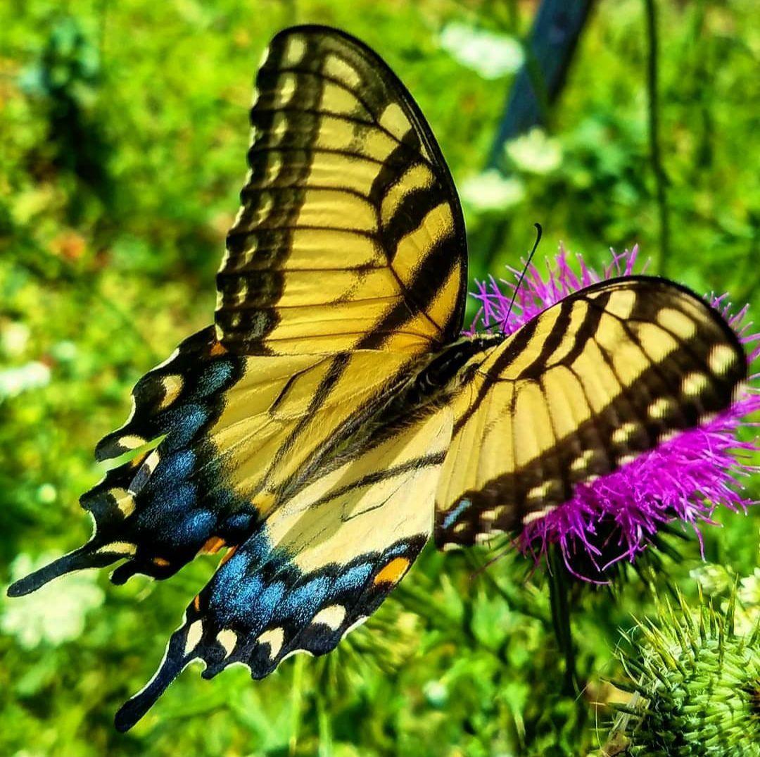 Butterfly in woods