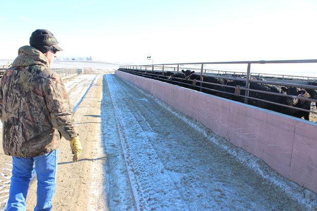 Doug Van Duyn feed yard