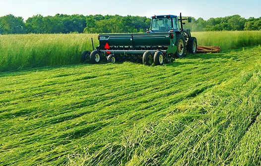 Terminating winter rye with roller crimper