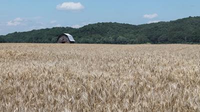 Missouri Wheat