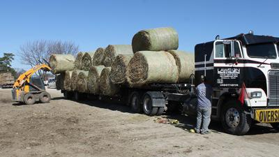 Truck loading at Hay Auction
