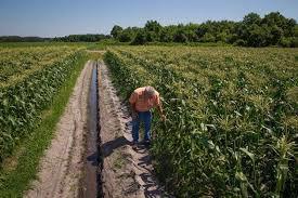 Farmer checks field