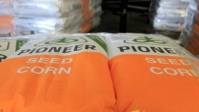 Seed corn bags