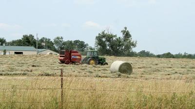 cutting of hay