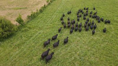 University of Illinois grazing project