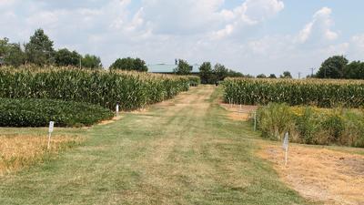 Sanborn Field  plots