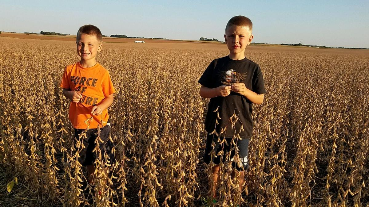 Zeke and Titus at the soybean field for harvest