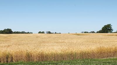Wheat field photo (copy)