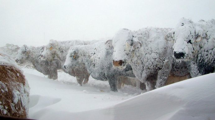 Agency helps with blizzard recovery | Livestock | agupdate.com