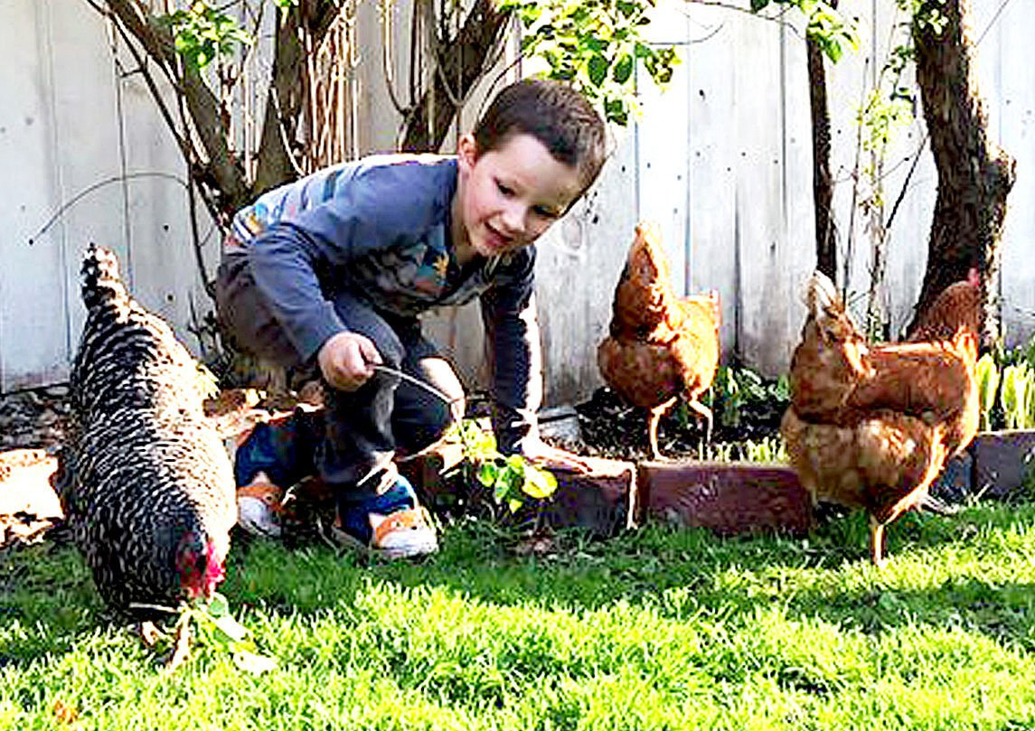 Ethan Munz plays with chickens