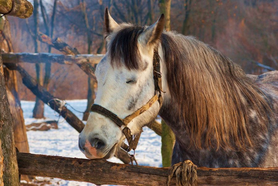 Horse sleeps