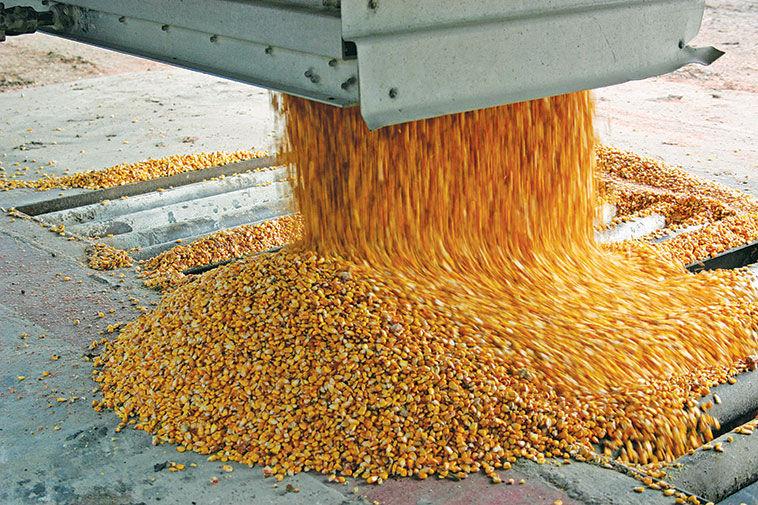 Corn yield grain photo