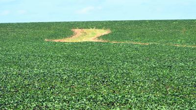 Soybeans July with waterway