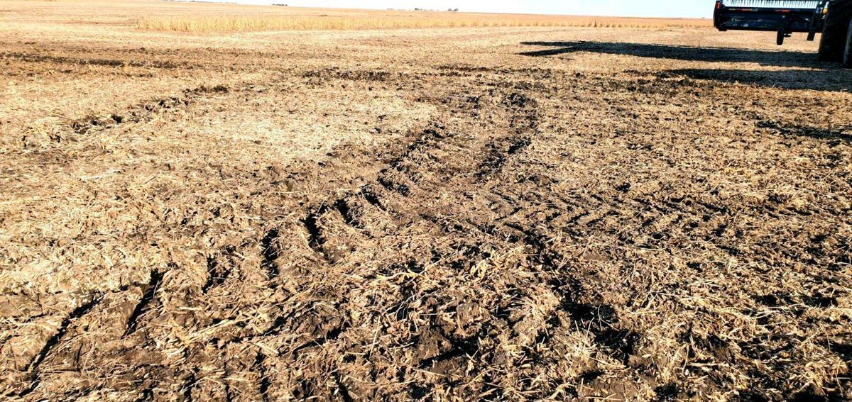 Field ruts