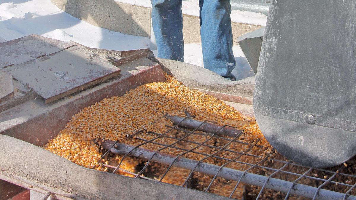 Loading corn