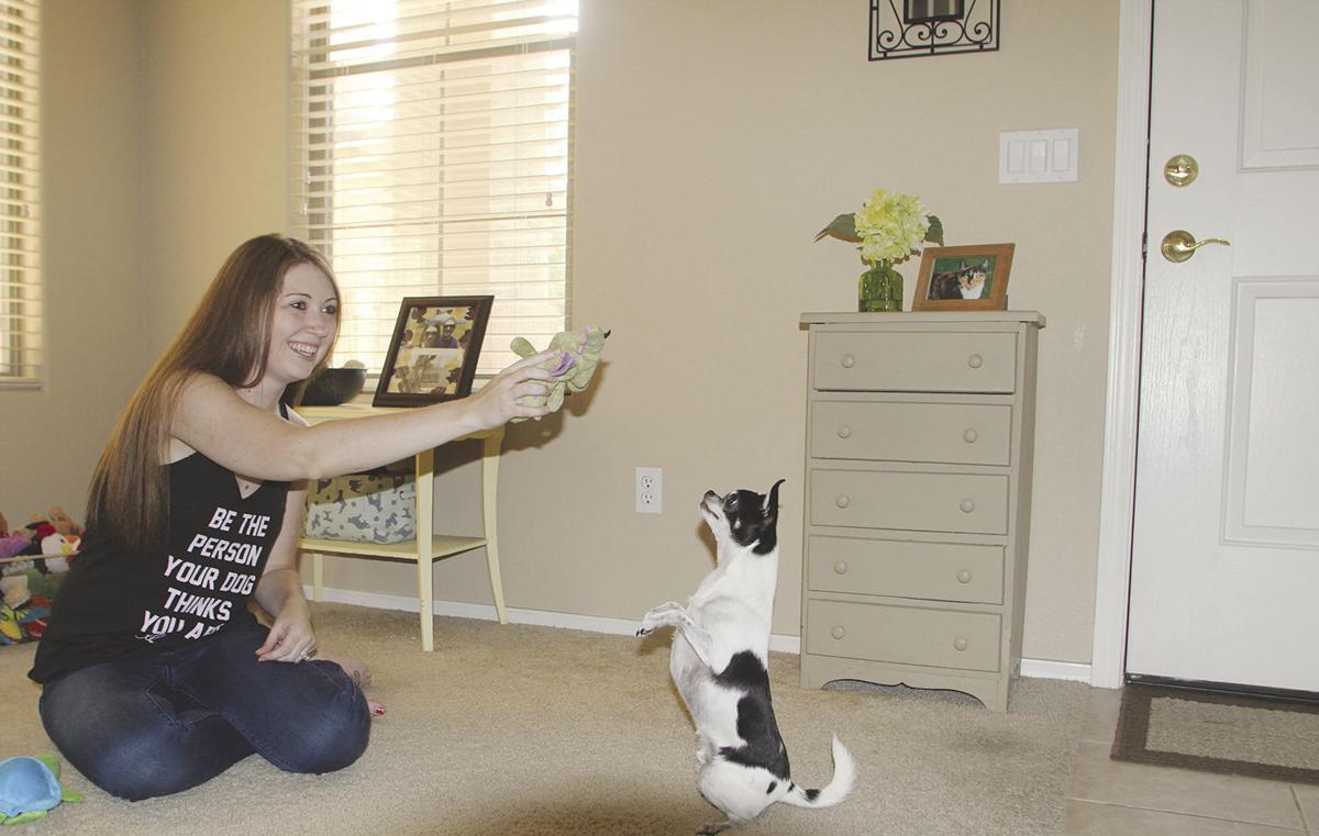 Pet Blogger