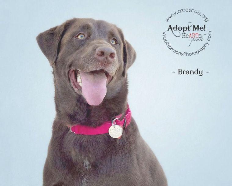 Someone to love: Brandy