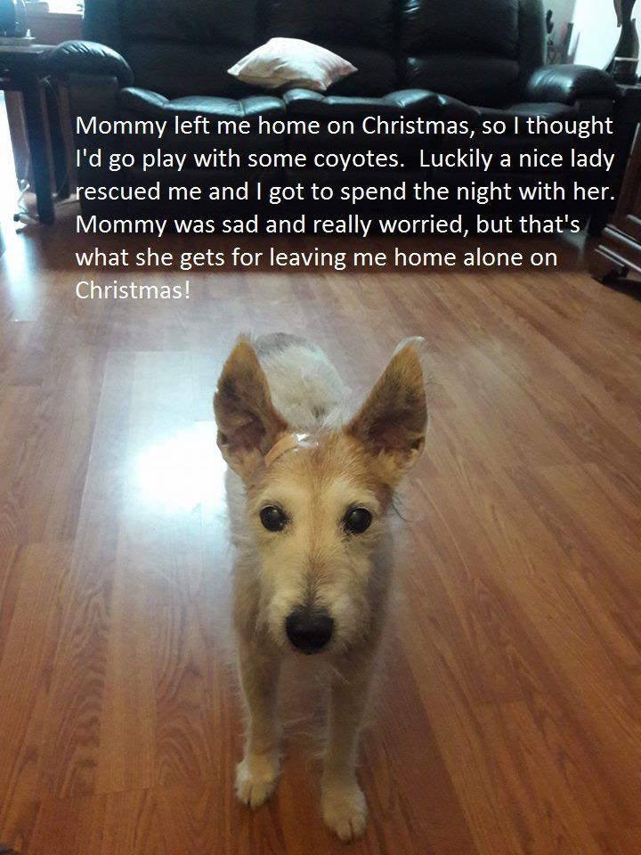This is how Rusty's owners posted the news of happy ending after he ran away on Christmas Day.