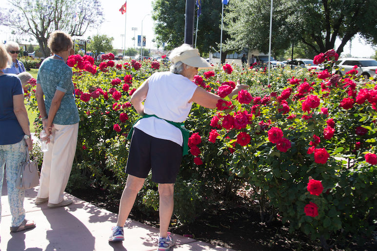 Visitors enjoy the blooms at the Rose Garden at Mesa Community College, the largest rose garden in the Southwest.