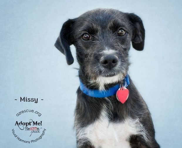 Someone to love: Missy