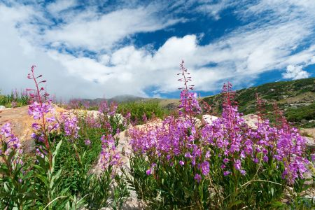 """""""profusion of orange, red and purple wildflowers delight as I walk through them"""""""