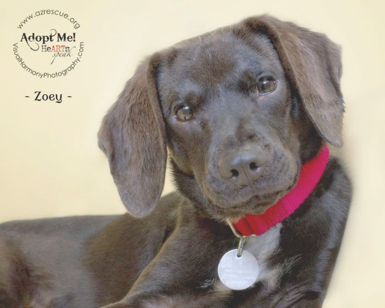 Someone to love: Zoey