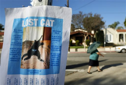 Pets Lost Cats