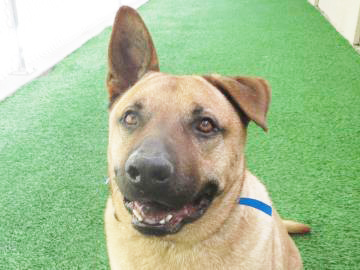 Someone to love: Scooby