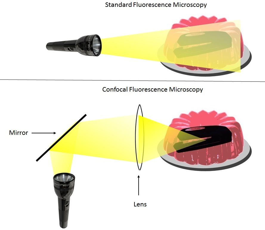 Confocal fluorescence microscopy
