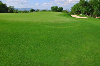 13114448 - green golf course