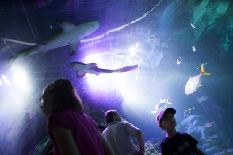 Shark Week at SEA LIFE
