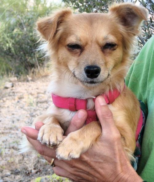 Pet of the Week: Tabitha