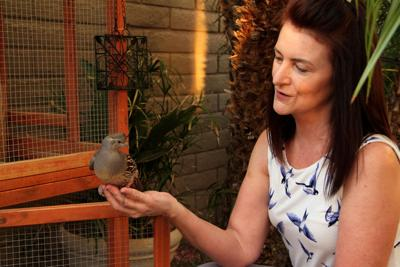 """Cheri Fromm of Ahwatukee is called """"The Quail Lady"""" for a reason. Founder of the Quail Sanctuary of Ahwatukee Foothills, Fromm has rehabbed scores of injured birds and nursed abandoned ones as well. She approaches her work with a physician's precision."""
