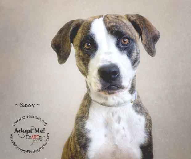 Someone to love: Sassy