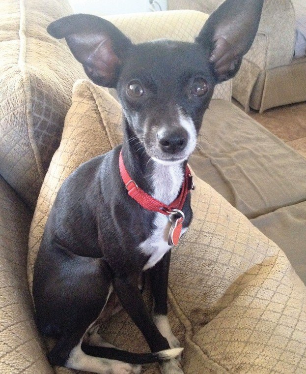 Someone to love: Gianna