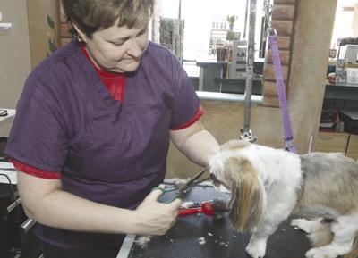 Diamond Cut Pet Spa