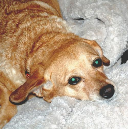 Someone to love: Maggie