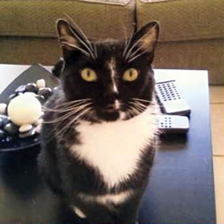 Pet of the Week: Simon