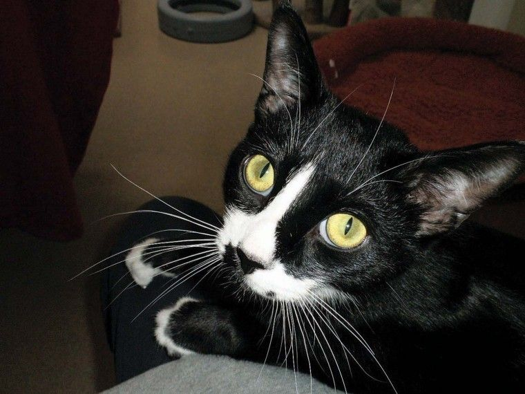 Pet of the Week: Nico