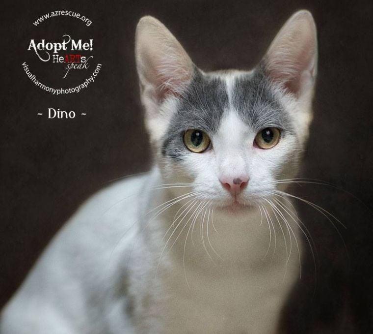 Someone to love: Dino