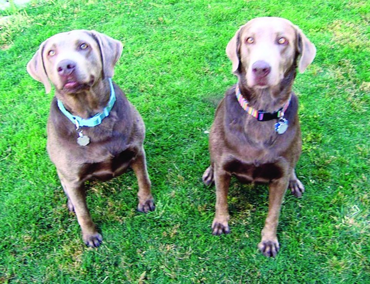 Pets of the Week: Bella and Emma