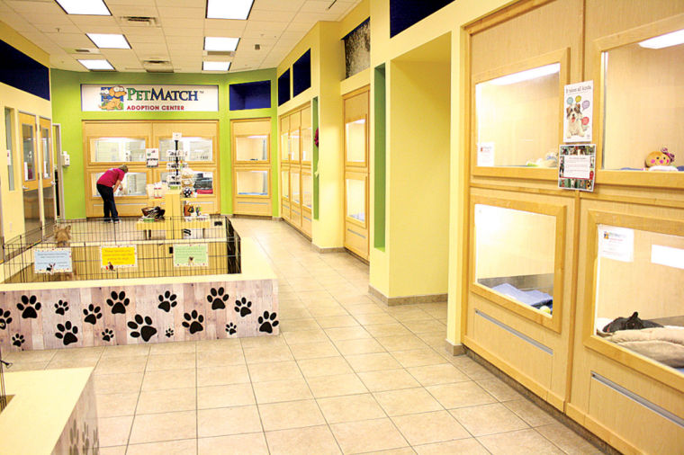 Element Chandler Fashion Center - Hotel - Chandler, AZ 85226