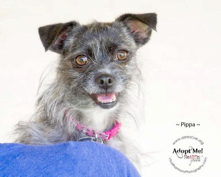 Someone to love: Pippa