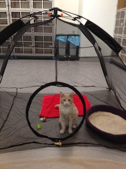 Cat isolation area