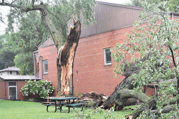 Storms cause tree damage in county