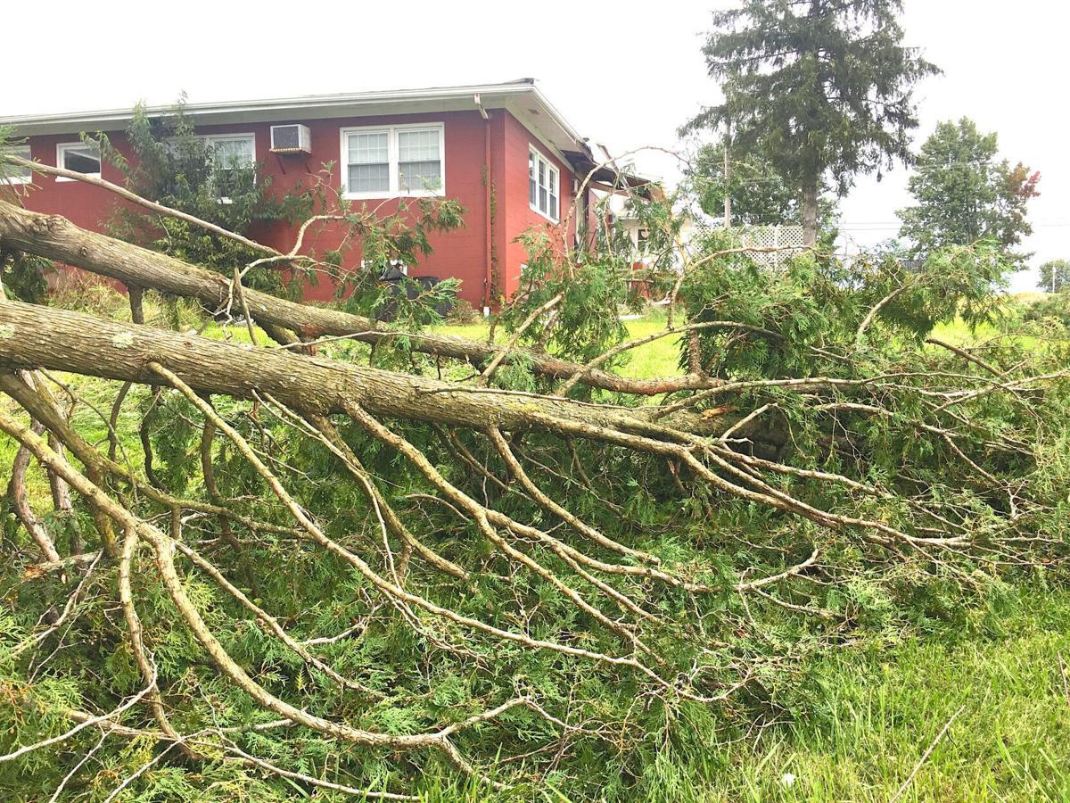 Small tornado hits Lake Township tree