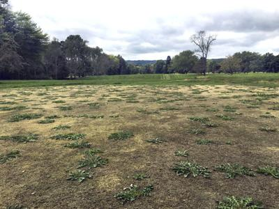 Closed golf course sells for less than $200,000