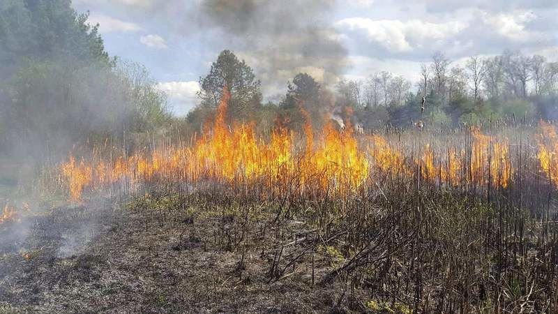 No one hurt in large brush fire